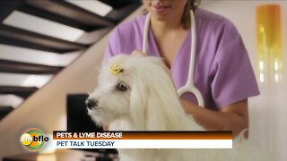 PET TALK TUESDAY - PETS AND LYME DISEASE