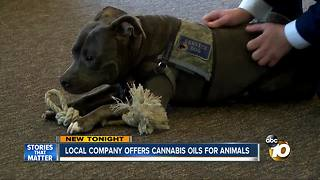 Local company offers cannabis oils for animals - Video