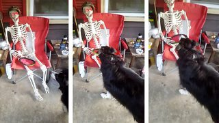 No body to play with! Dog tries to play fetch with lifeless skeleton - Video