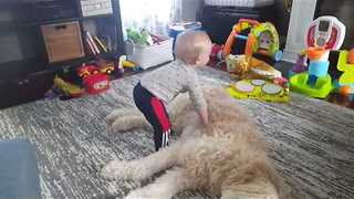 Little Boy Tries to Have Nap on Fluffy Dog - Video