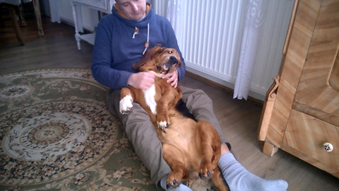 Basset Hound relaxes with his dad.