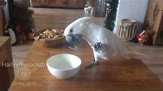 Clever Cockatoo Uses Bowl and Spoon to Eat Yogurt - Video