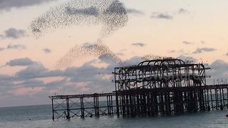Starling murmuration swirling above Brighton's West Pier - Video