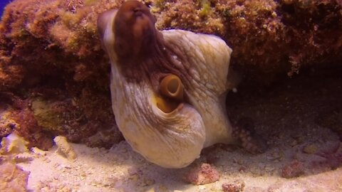 Octopus puts on a display of color and texture change