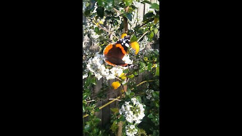 Beautiful Butterfly In The Garden.