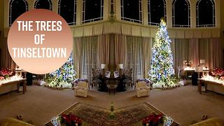 Hollywood's Christmas trees are up! - Video
