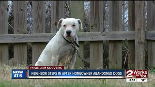 PROBLEM SOLVERS: Chained dogs abandoned for months