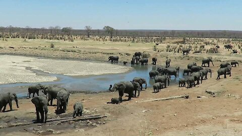 Incredible number of elephants visit waterhole together