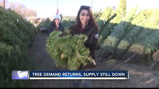 Treasure Valley feeling effects of Christmas Tree shortage - Video