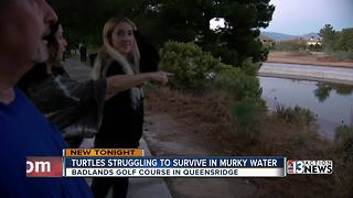 Queensridge residents concerned about turtles - Video