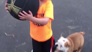 Bulldog Puppy Dog Pulls On A Tot Boy's Shorts