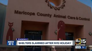 Valley animal shelters packed after NYE holiday - Video