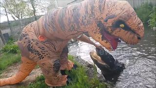 'Movie star' alligator vs man in T-rex costume - Video