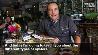 Your guide to ordering the right oyster - Video
