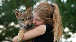 Woman adopts orphaned wolf pup  - Video