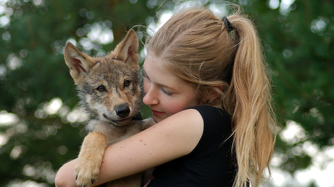 Woman adopts orphaned wolf pup