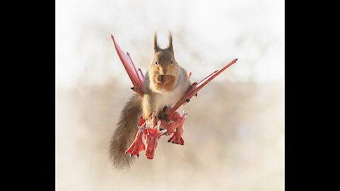 Photos of squirrels in the Games of Thrones