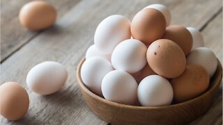White Eggs Vs. Brown Eggs