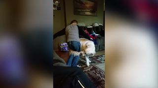 Dog Chases His Own Tail Around His Young Human Friend - Video