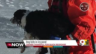 Harrison firefighters save dog that fell into icy pond - Video