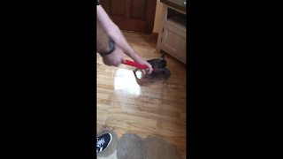 Puppy sabotages owners attempts at mopping floor - Video