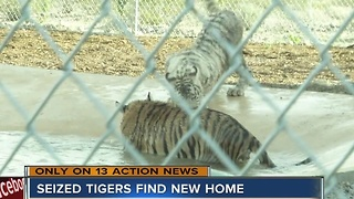 Tigers seized in Nye County find new home - Video