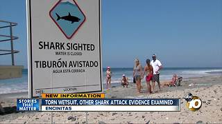 Experts gather evidence to learn more about shark that attacked teen