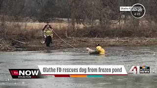 Olathe FD rescues dog from pond - Video