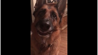 Happy dogs learn how to smile on command - Video