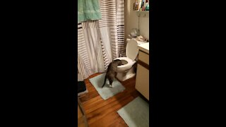 Kitty cat gets busted in the toilet!!!