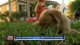 Puppies delivered Christmas Day - Video