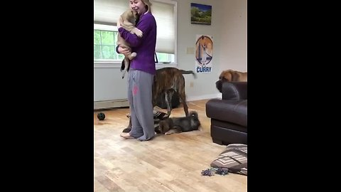 Trio of dogs jealous of new puppy addition