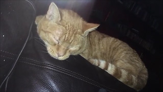Elderly cat snores like elderly man!  - Video