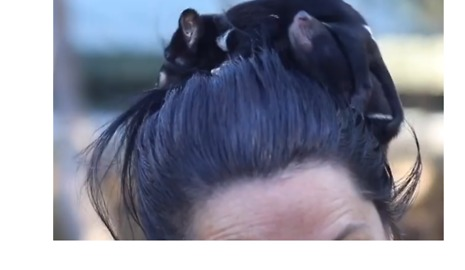 Tasmanian Devils Dash and Violet are Tiny Terrors