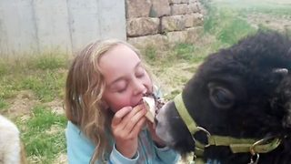 Baby yak and girl share tasty taco reminiscent of lady and the tramp scene - Video