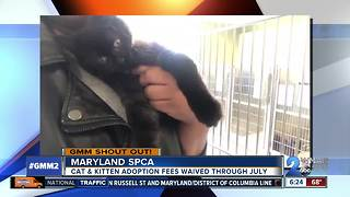 Good morning from Chandelier and the Maryland SPCA! - Video
