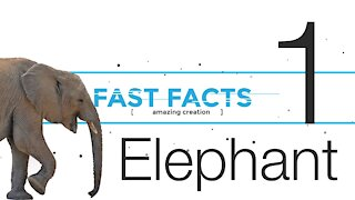 FFE1   God's Amazing Creation - the Elephant   Fast Facts   Episode 1