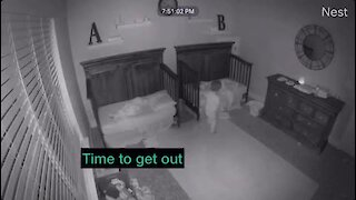 Twins preciously find the courage to find mommy during a thunderstorm