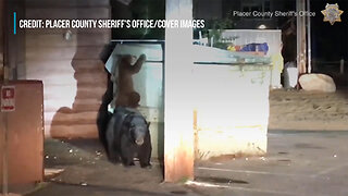 Bear Cub Tries To Rescue Sibling From Dumpster