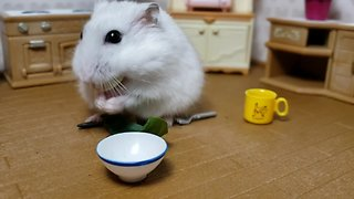Tiny hamster enjoys meal in tiny kitchen