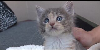 Pet of the week: kitten almost ready for forever home