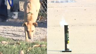 Keeping pets safe during fireworks season - Video
