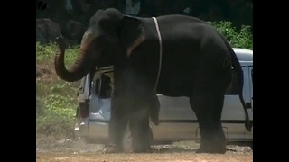 Angry Elephant - Video
