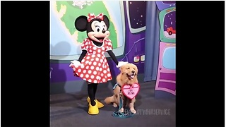 Service Dog Thrilled To Meet Minnie Mouse At Disneyland