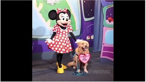 Service dog thrilled to meet Minnie Mouse