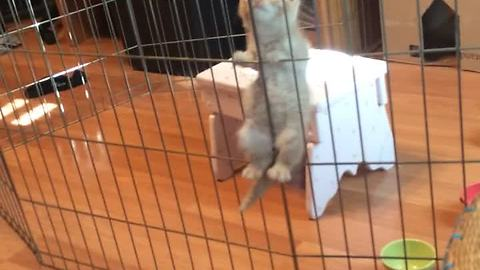 Kitten jail break caught on camera