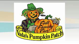 Vala's Pumpkin Patch 9/13/17 - Video