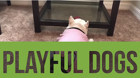 This compilation of playful dogs is exactly what you need today!