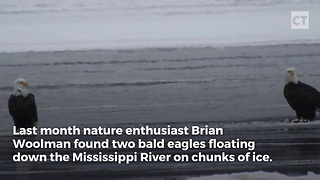 Bald Eagles Hitch Ride on Ice Floating Down River - Video