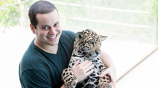 Cute Jaguar Cub Saved By Vets Lives With Human Family - Video